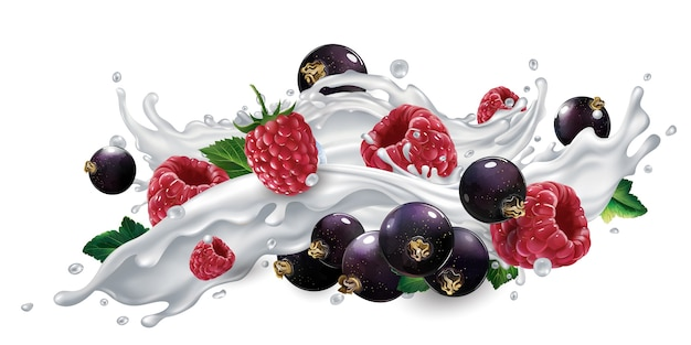Fresh black currants and raspberries in a splash of milk or yogurt on a white background. Premium Vector