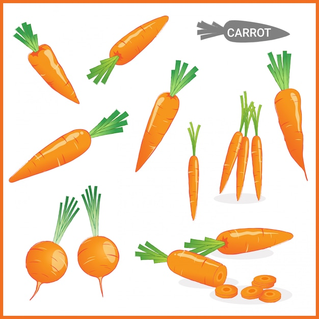 Fresh carrot vegetable with carrot tops Premium Vector