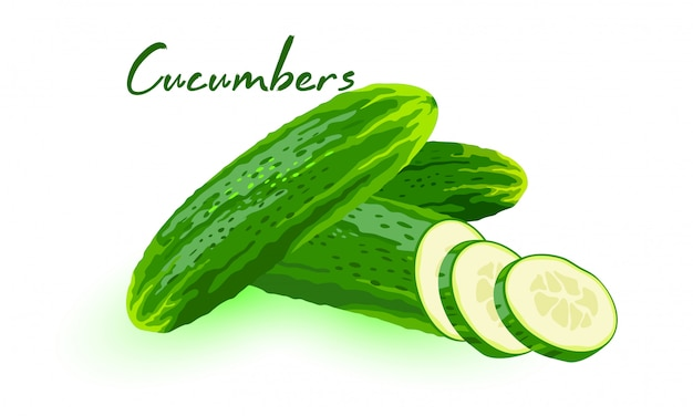 Fresh cucumbers, cukes or gherkins whole and cut to segments. green vegetable using for salads, pickling. cartoon  illustration  on white background for menu, recipes, packing. Premium Vector