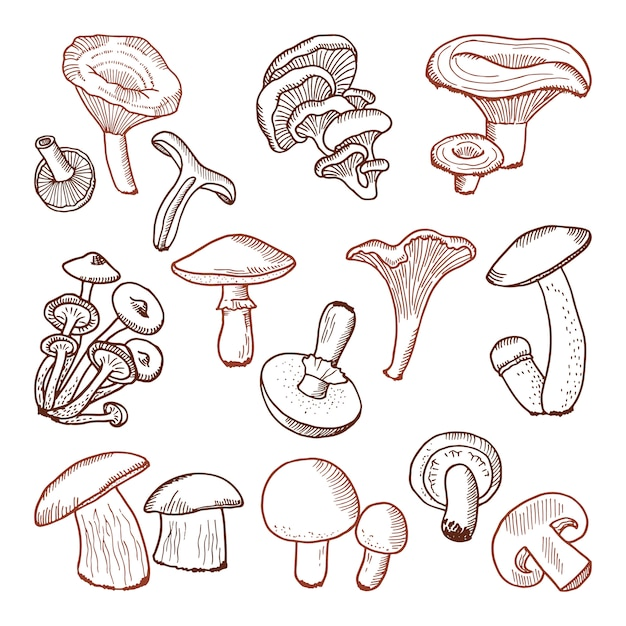 Fresh food of mushrooms. nature vector hand drawn illustration. Premium Vector