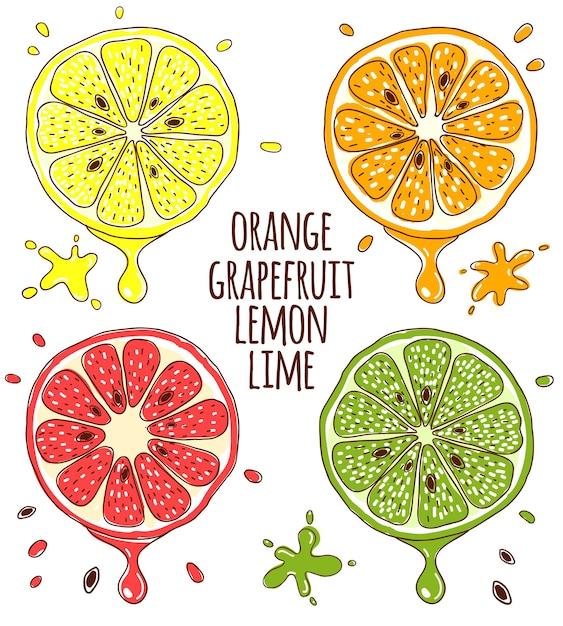 Дольки свежих фруктов лимона, лайма, апельсина и грейпфрута. Бесплатные векторы