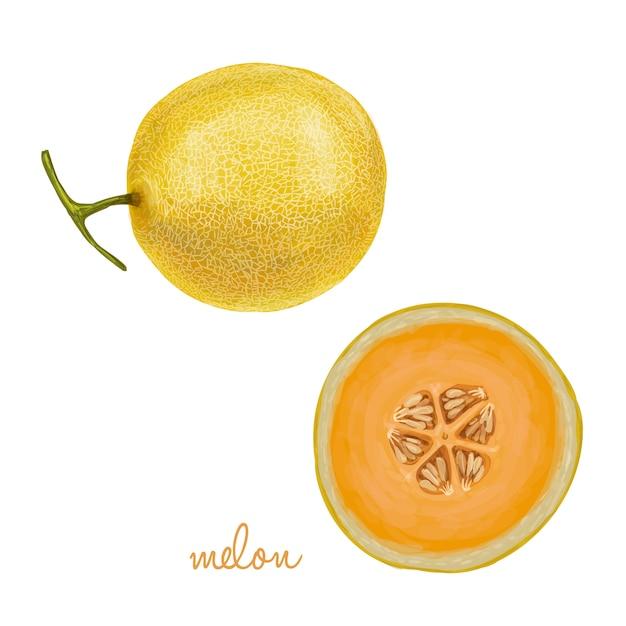 Fresh juicy fruit collection Premium Vector