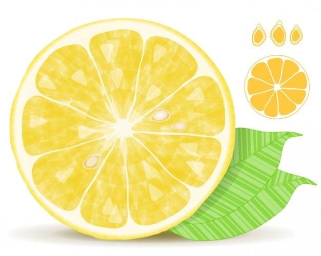 lemon vector free download - photo #9