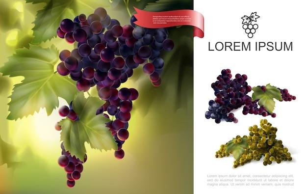 Концепция свежего натурального винограда Бесплатные векторы