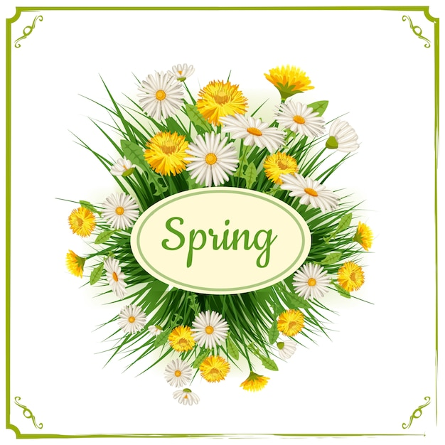 Fresh spring background with grass, dandelions and daisies. vector Premium Vector