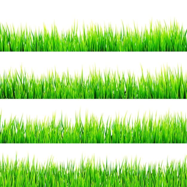 白い背景に分離された新鮮な春の緑の草。 Premiumベクター