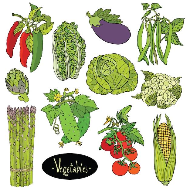 Fresh vegetables set eggplant, cabbage, peppers, beans, tomato, cucumber, asparagus, cauliflower, artichoke, lettuce, corn Free Vector