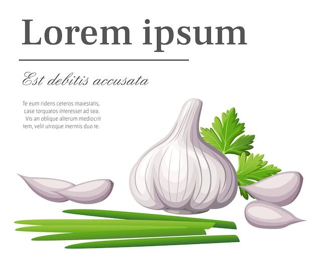 Свежий белый чеснок и кусочки чеснока с проростками овощей из сада иллюстрация органических продуктов питания с местом для текста на белом фоне страницы веб-сайта и мобильного приложения Premium векторы