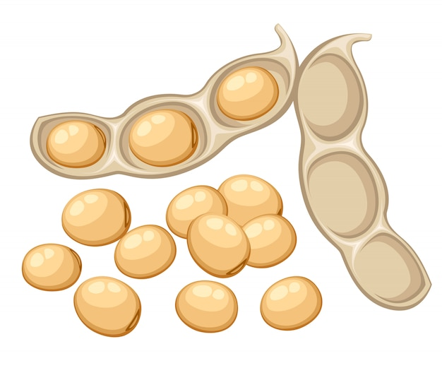 Fresh whole soybean vegetable from the garden organic food open bean pod  illustration  on white background web site page and mobile app Premium Vector