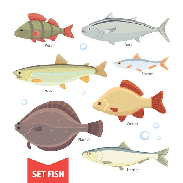 淡水魚のコレクションは、白い背景で隔離。魚のベクトル図を設定します。 Premiumベクター