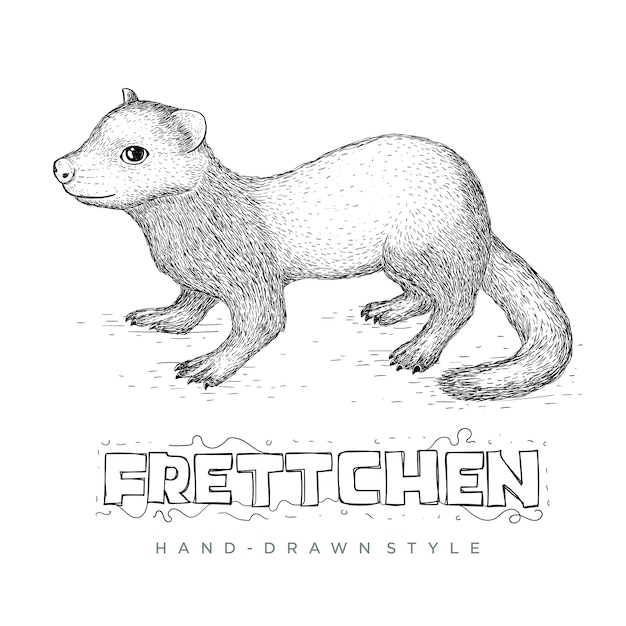 The frettchen vector looks realistic. hand drawn animal illustration Premium Vector