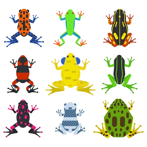 Frog cartoon tropical animals and green nature icons Premium Vector