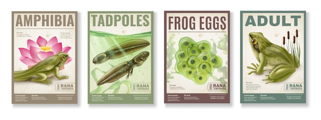 Frog life cycle from fertilized eggs jelly  tadpoles to adult amphibia 4 realistic posters set Free Vector
