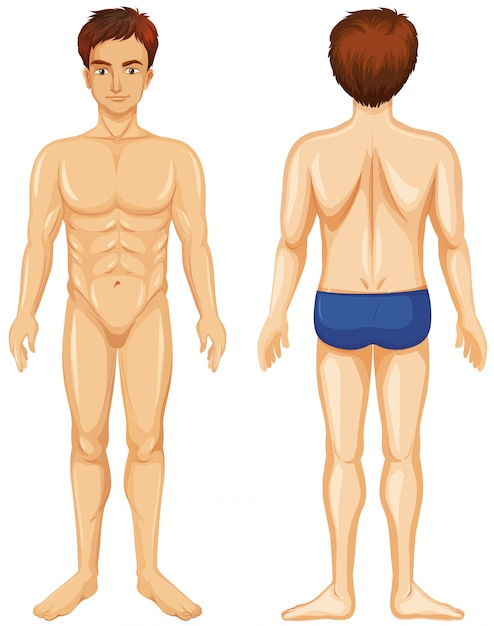 Front and back of human male Free Vector