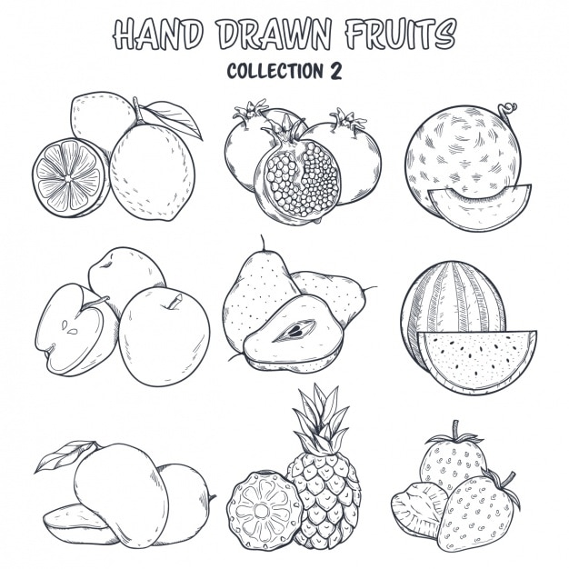 Fruit coloring design Vector | Free Download