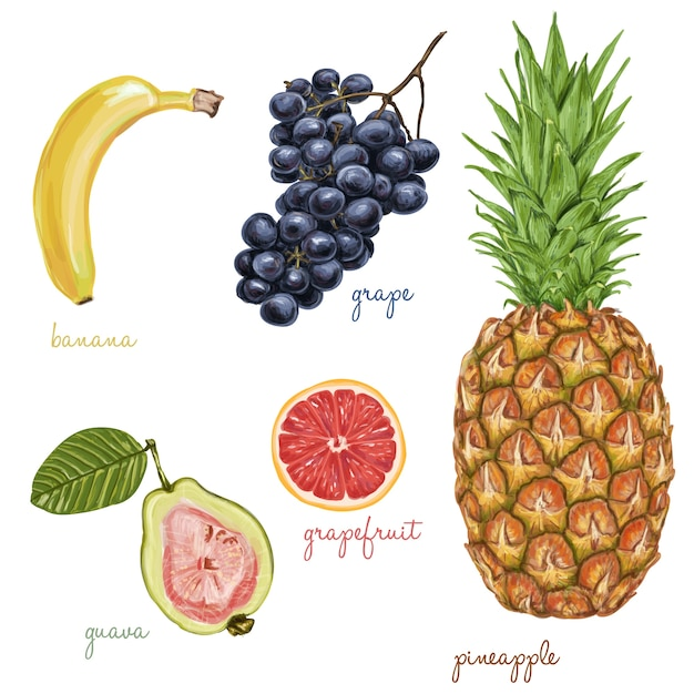 Fruits painted with watercolors Free Vector