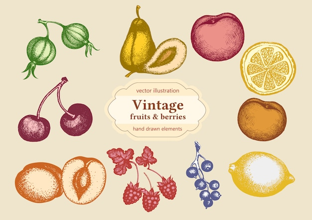 Fruits set Premium Vector