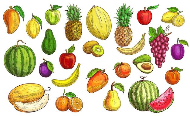 果物のスケッチ、オレンジ、リンゴ料理、パパイヤ Premiumベクター