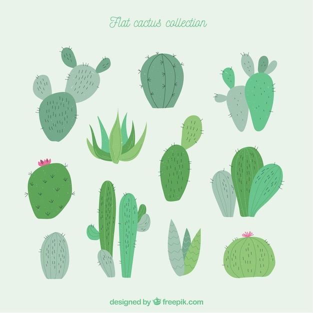 Fun collection of modern cactus