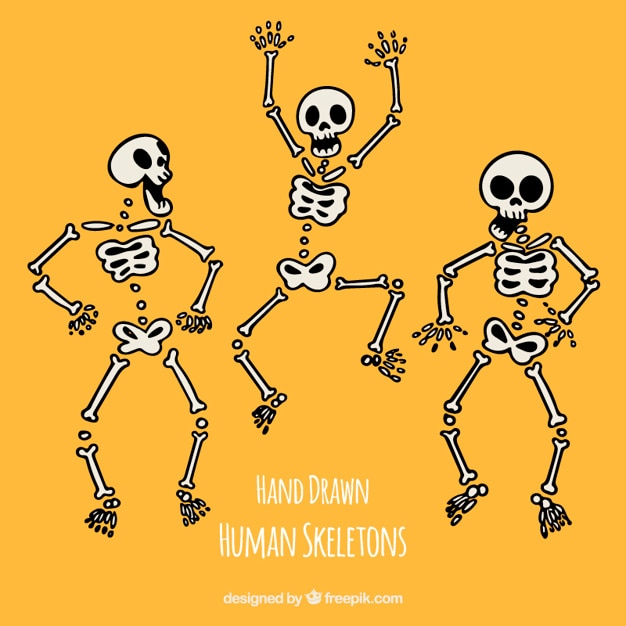 Funny hand drawn human skeletons Free Vector