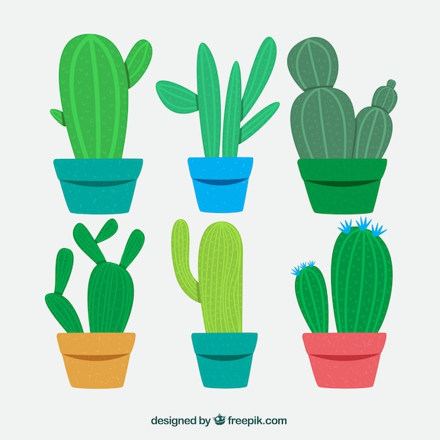 Funny variety of classic cactus