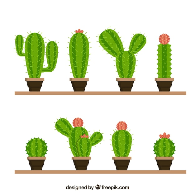 Funny variety of lovely cactus
