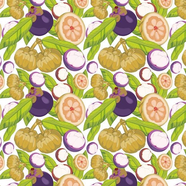 Garcinia Cambogia Fruit Premium Vector