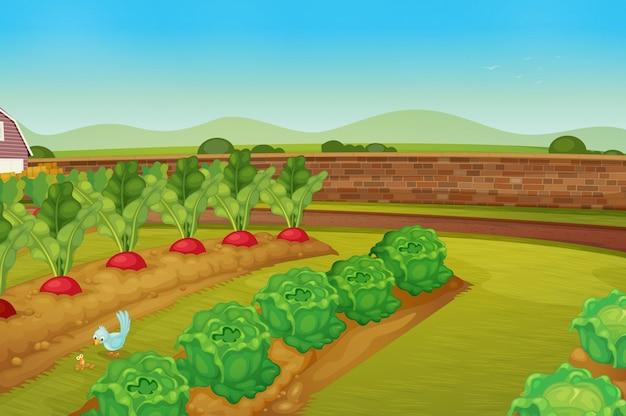 garden Free Vector