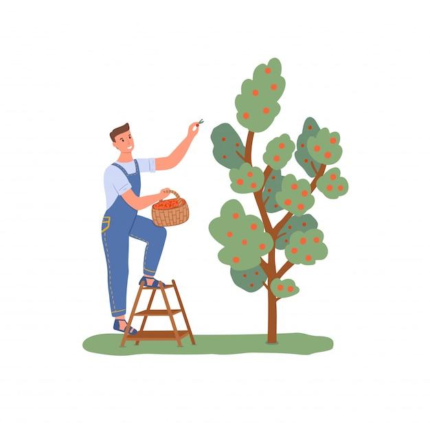 Садовник собирает яблоки с дерева Premium векторы