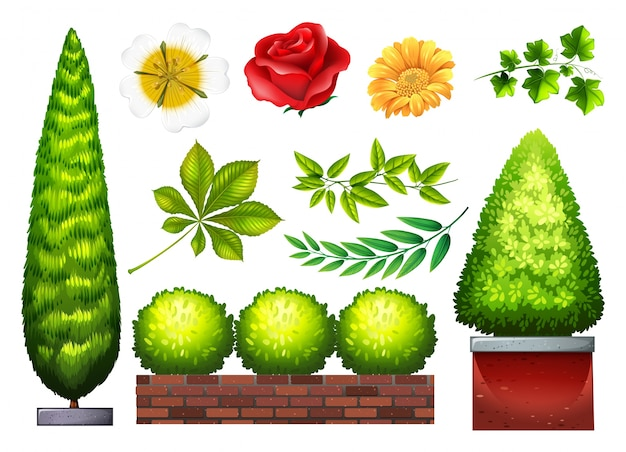 Gardening Plants And Flowers In Many Kinds Free Vector