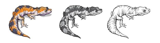 ヤモリトカゲ動物。白い背景で隔離の自然の野生生物の爬虫類。 Premiumベクター