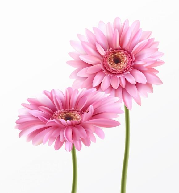 Gerbera flower and spring lettering. Premium Vector