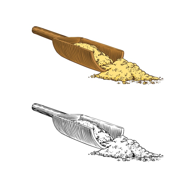 Ginger root spice, chopped rhizome, fresh plant ingredient. Premium Vector
