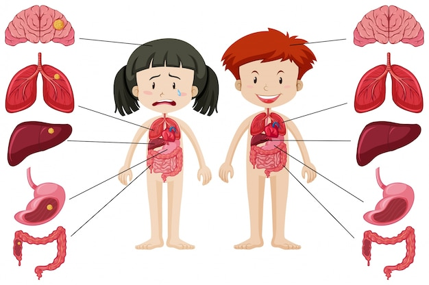 girl and boy with different healthy and unhealthy body