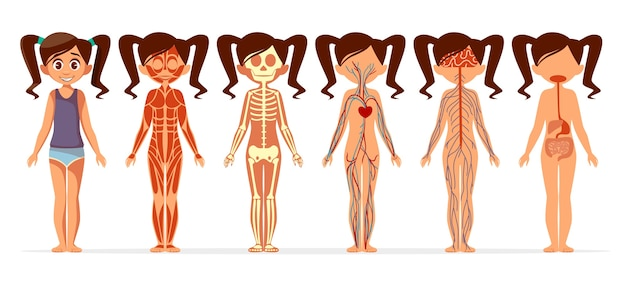 Girl body anatomy. cartoon medical female human body structure of muscular Free Vector