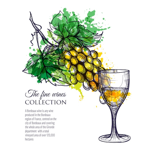 Glass of white wine with branch grapes Free Vector