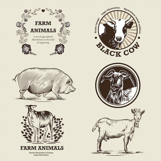 Goat, sheep, pig, cow. illustration in the style of engraving. Premium Vector