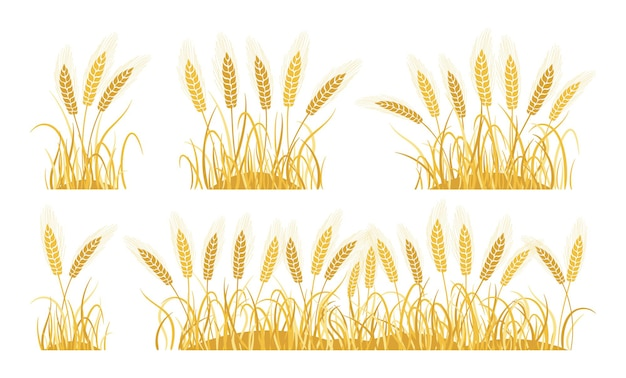 Golden field ears wheat cartoon set ripe spikelets wheat collection agricultural oat bakery flour production Premium Vector