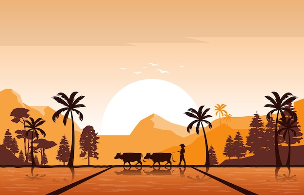 Golden sunrise in asian rice field paddy plantation agriculture illustration Premium Vector