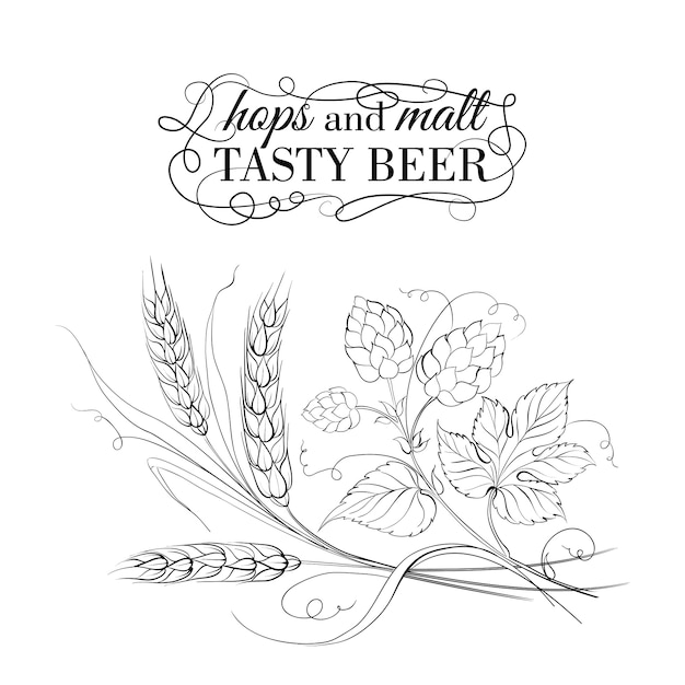Golden wheat and hop on white Premium Vector