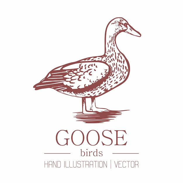 Goose. vintage style. hand drawing. Premium Vector