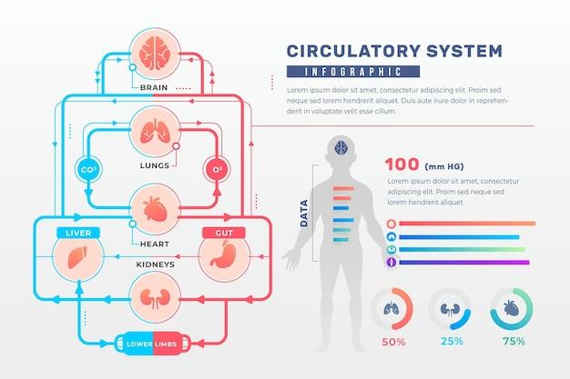 Gradient circulatory system infographic Premium Vector