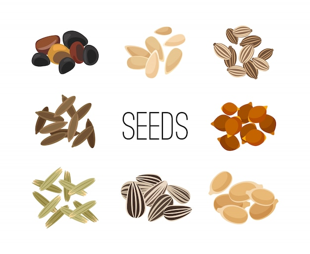 Grains and seeds isolated on white Premium Vector