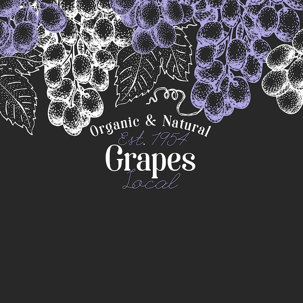 Grape berry design. hand drawn vector fruit illustration on chalk board. engraved style retro botanical. Premium Vector