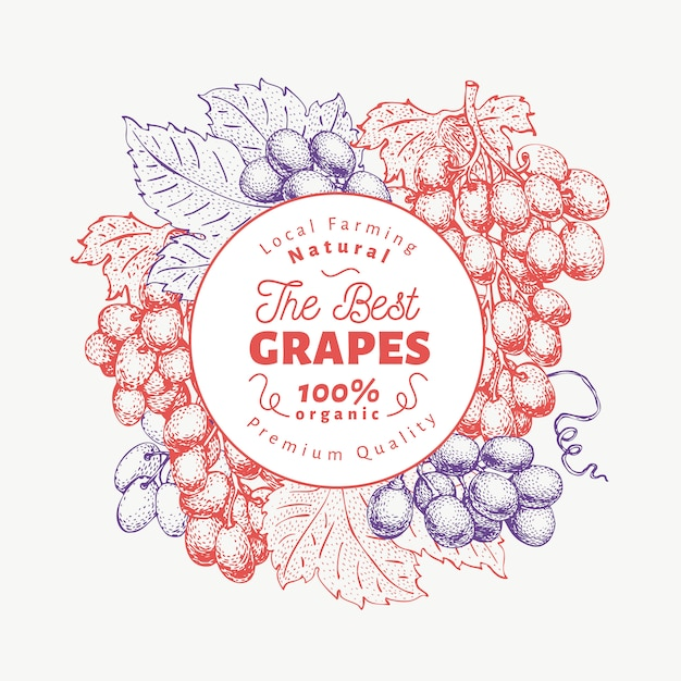 Grape berry design template. hand drawn vector fruit illustration. engraved style retro botanical background. Premium Vector
