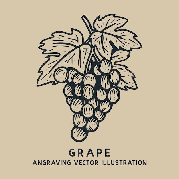 Виноград с листом старинные рисованной гравюры иллюстрации Premium векторы