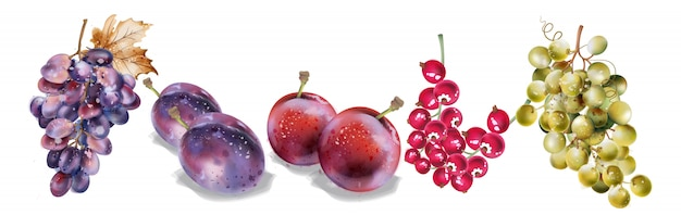 Grapes and plums watercolor. autumn fall harvest set Premium Vector