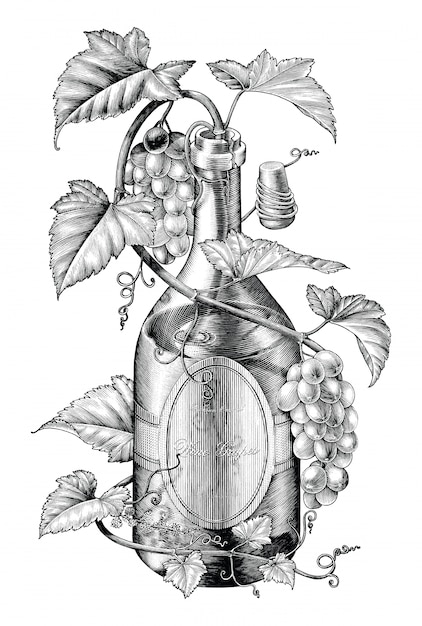 Grapes twing in wine bottle illustration black and white clip art, the concept of wine grapes banding Premium Vector