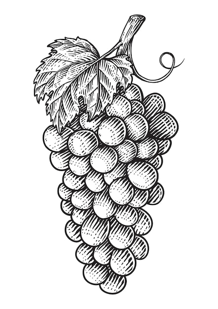 Grapes with leaves Premium Vector