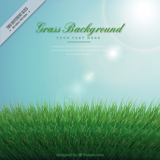 Grass background with bright sun